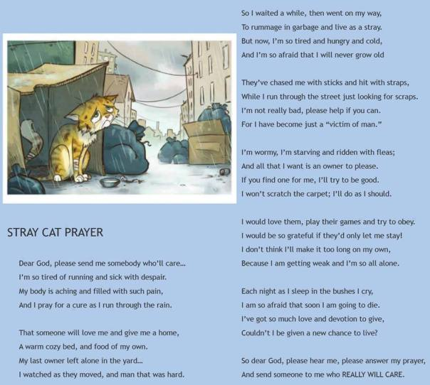 stray cat prayer