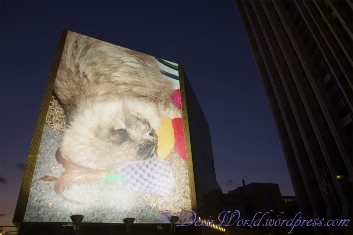 dw Dezi evening billboard