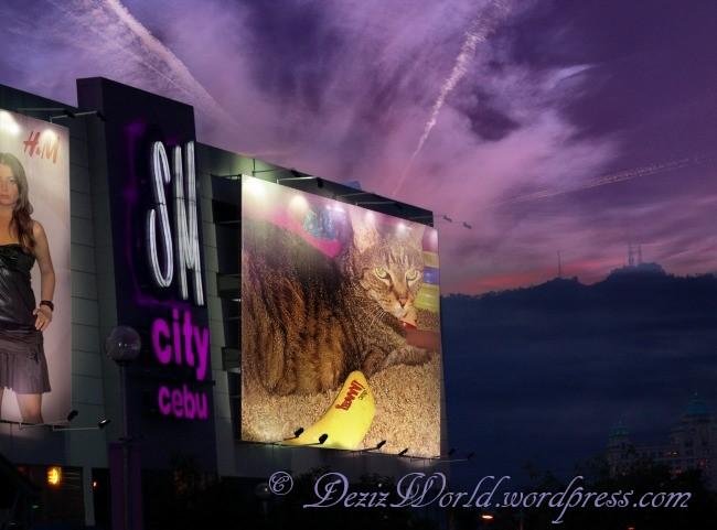 dw Lexi purple sky