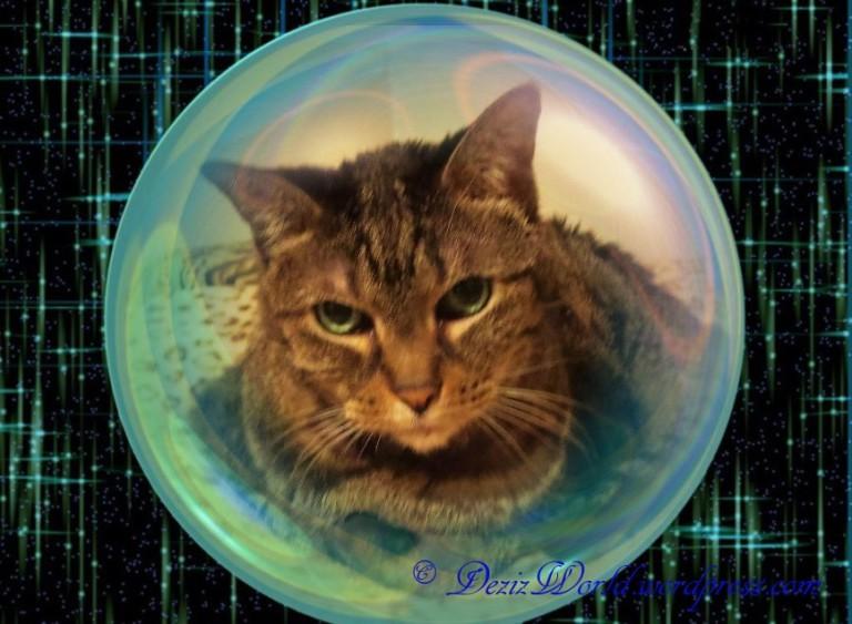 dw Lexi space bubble