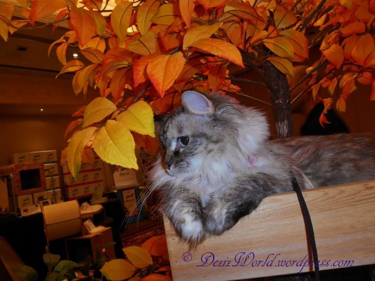 dw4192Dcat tree2
