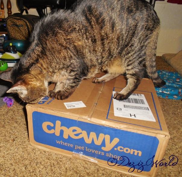 It's a Chewy box. I'z wunner whatz in it?