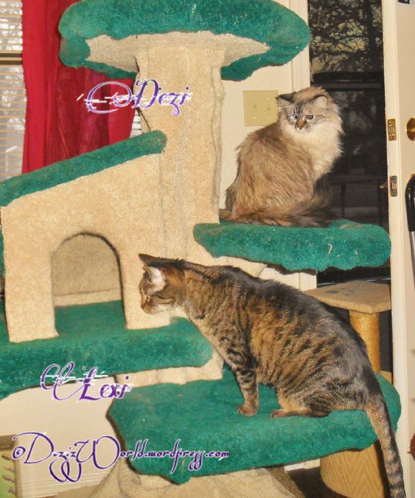 dw DnL cat tree50sm
