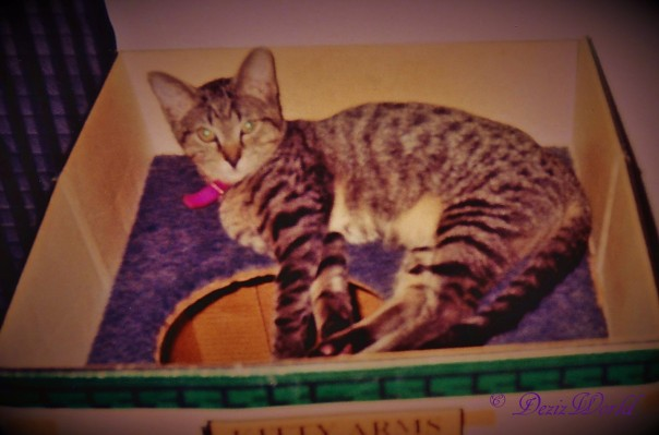dw Lexi in box