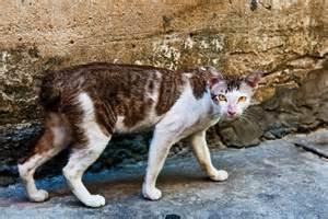 feral cat shutterstock