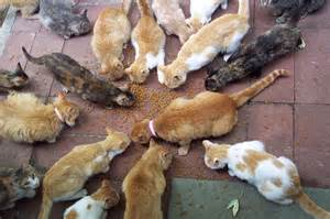 feral cats eat