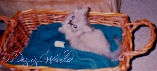 Baby Dezi lays in a basket atop a soft bath towel