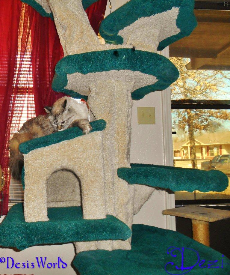 dw Dezi lays on house1