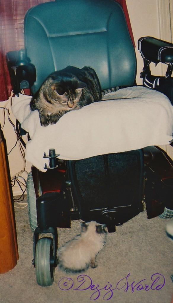 dw DnL wheelchair