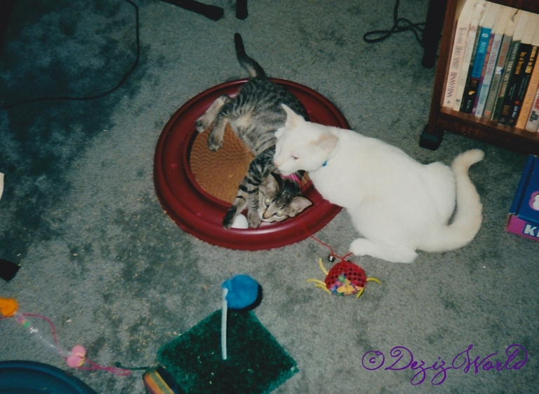 Lexi and Lucky play with each other