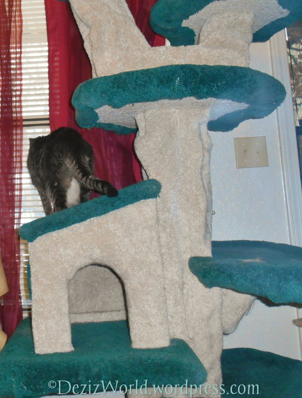 dw Lexi on cat tree68
