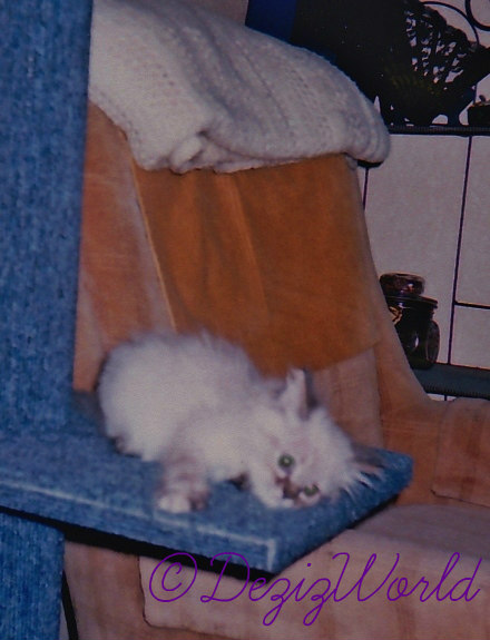 Baby Dezi laying on the cat perch