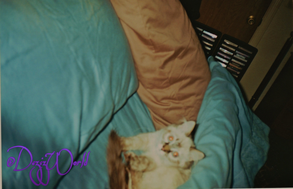 Furgive da beamer eyes, this is one of those 35mm fotos mommy scanned to da puter.