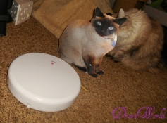 Shoko even got bwave enuff to play wiff da FroliCat Flik