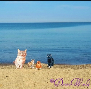 """Lookit dat bootyful water and all this """"litter"""". Not much purrivacy, but it sure is purretty."""