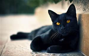 blackcatwallpaper