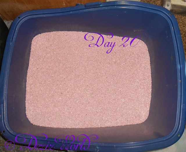 This is da same pawdee box wiff Simple Solution 30 day litter on day 20. Still looks like it did on day 1. MOL