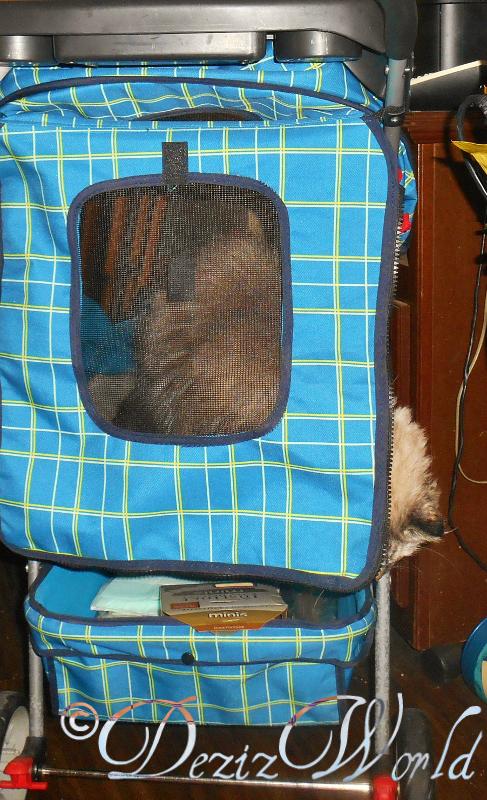 Nope, Me dusn't wanna go mommy. See ya'