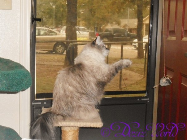 Dezi playing with the over the door hanging mouse she got for her 6th birthday from aunty anonymous