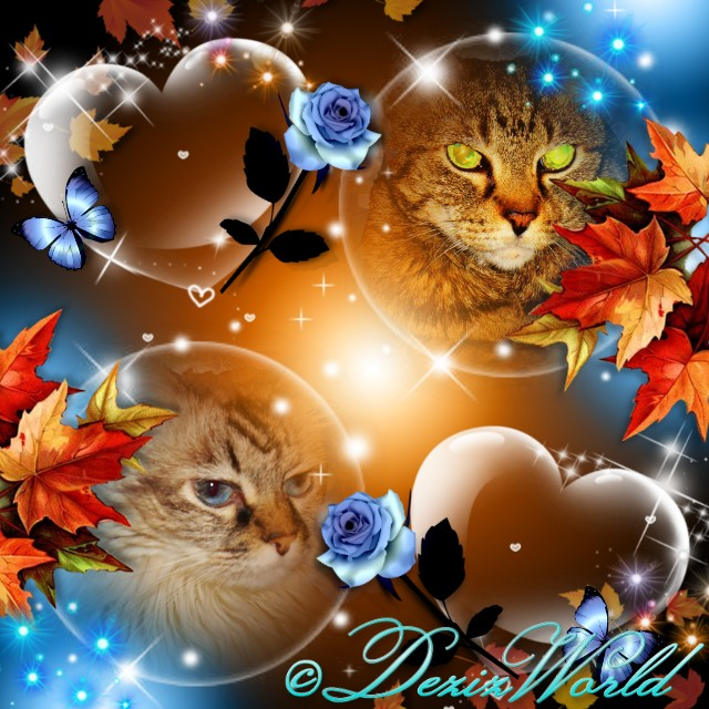Profile photos of Dezi and Lexi in bubbles with blue roses and fall colored leaves