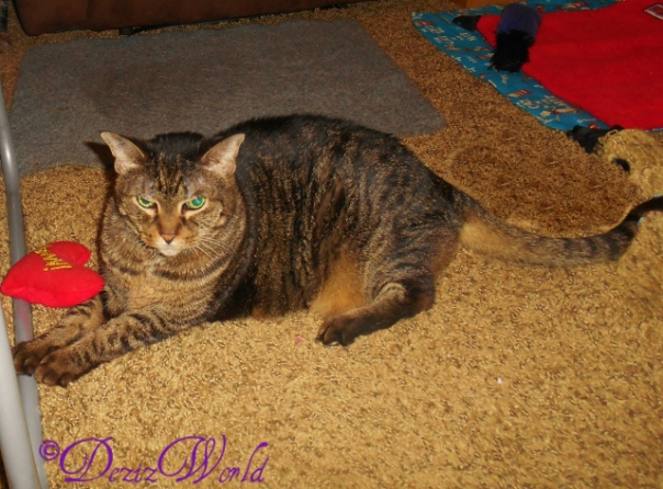 No footos of sissy in da pawdee box as mommy was...indisposed. MOL But we fawt you wuld liike to see one of her we took last night. Isn't she purretty?!!!