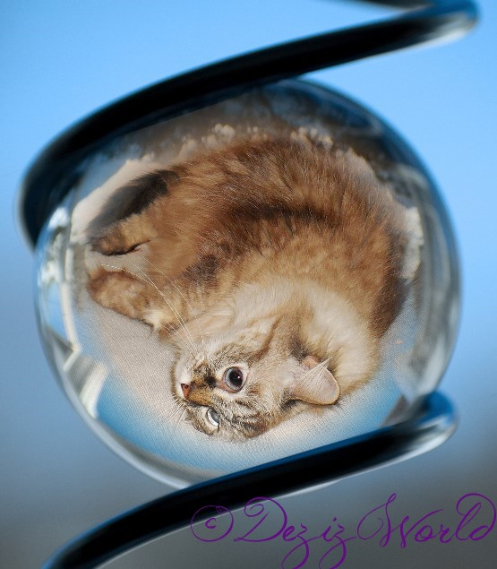 dw-pmDeziglassball