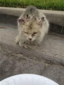 feral cat1
