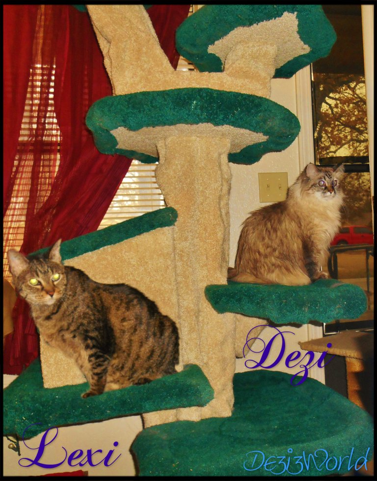 #Dezi and #Lexi sit on the #Fandango #Cat tree
