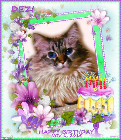 Dezi birthday card frame with cake and purple daisies from Pipo and Minko of Webeessiamese