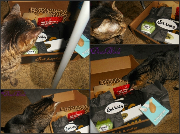#Cat Lady box collage with Lexi looking into box, an climbing into box