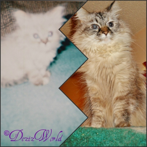 Collage #Dezi as a baby and now at 6 years old