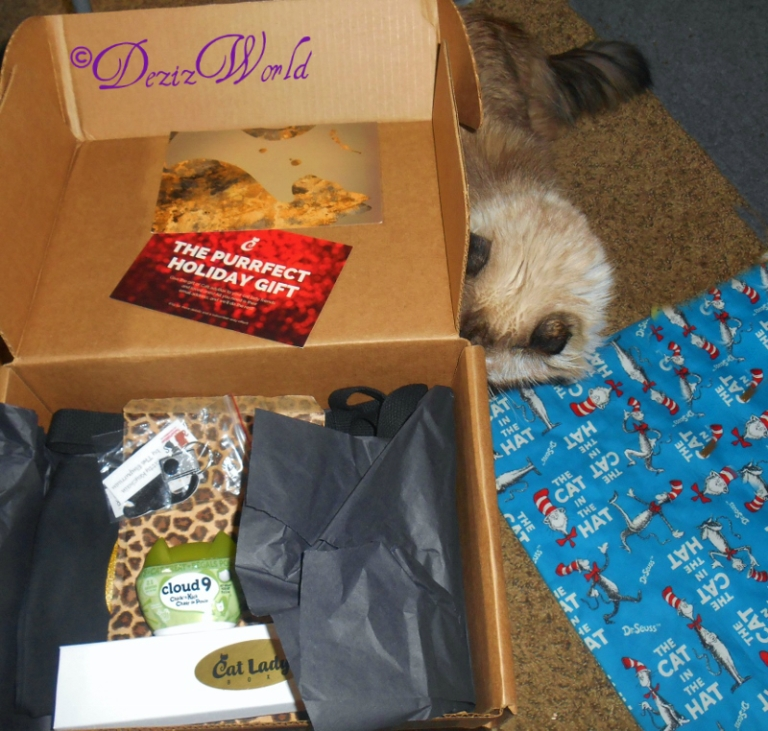 #Dezi and th Cat Lady box