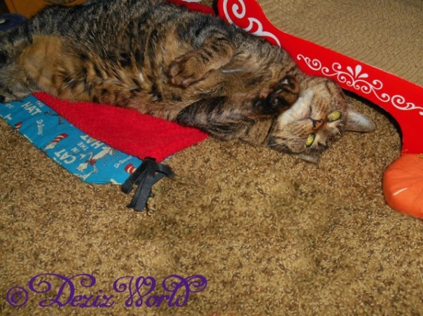 Lexi laying on her back on nip mat looking cute