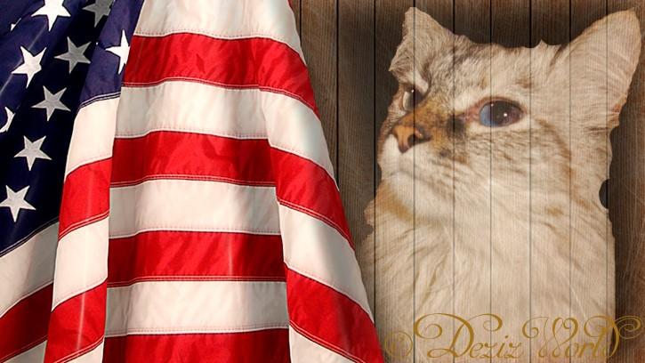 Dezi and American Flag
