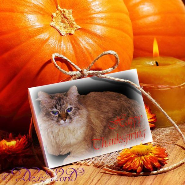 #Dezi in Thanksgiving frame surrounded by pumpkins