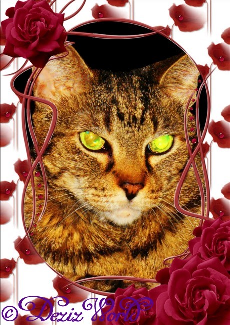 Lexi in a frame of red roses and rose petals