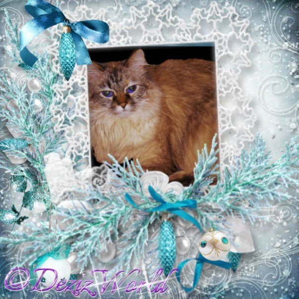 Dezi in turquoise frosty frame