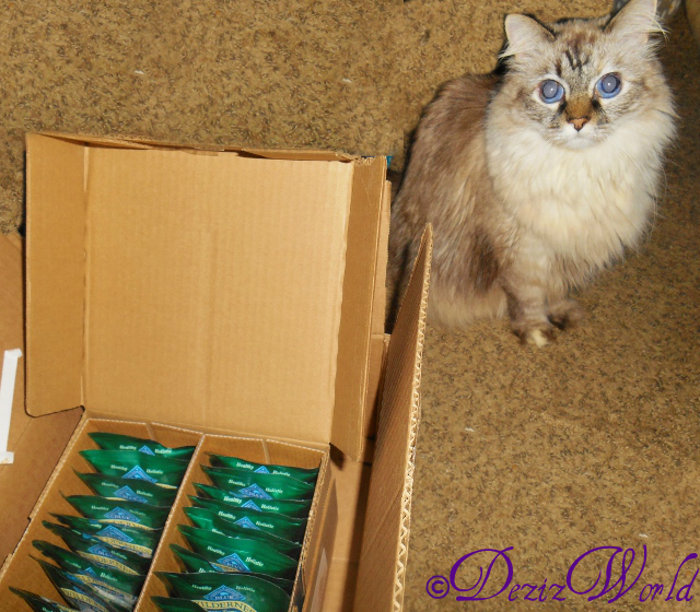 #Dezi posing by the case of Blue Wilderness Tasty morsels