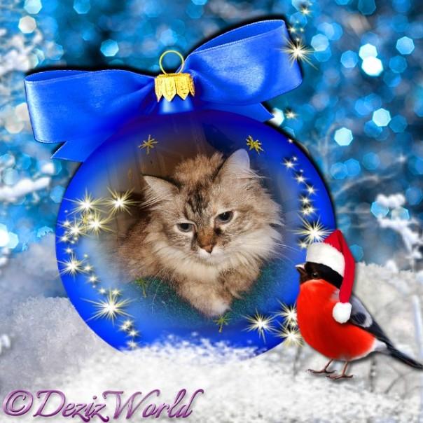 Dezi on a blue round Christmas ornament