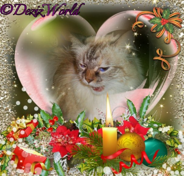 Open mouthed Dezi in a heart with candle and ornaments and fir