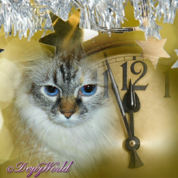 Dezi in a frame with the New Years clock at almost midnight