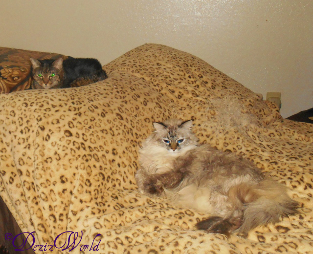 Dezi and Lexi laying on the bed
