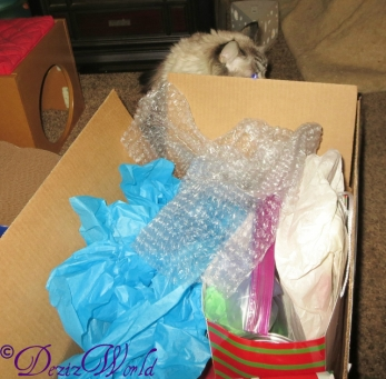 Dezi trying to sneak a peek at the box from Cat and awnty Lisa