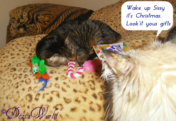 Lexi sleeps on bed surrounded by some of the Christmas gifts while Dezi meows from the steps