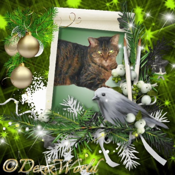 Lexi in green Chrristmas frame