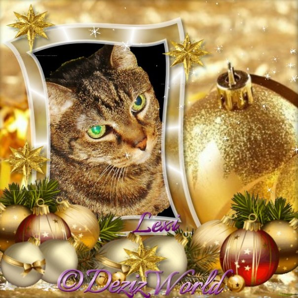 Lexi in goleen Christmas frame with red and gold ornaments