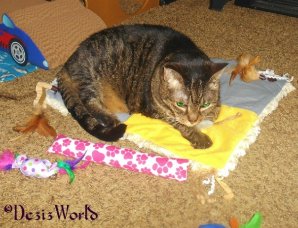 Lexi enjoying the new nip mat play station from Cat, Nugget and awnty Lisa