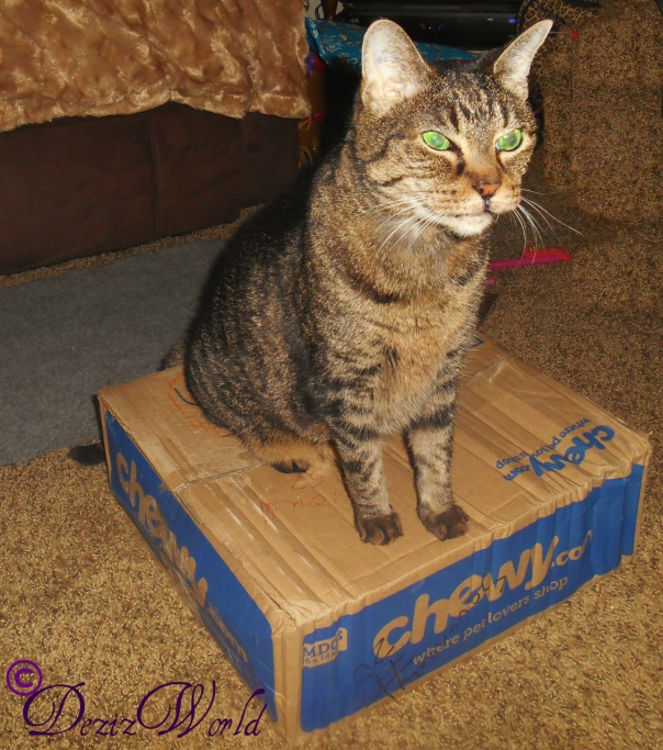 #Lexi sitting on top of #Chewy box