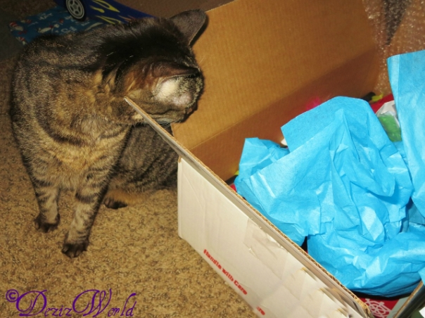 Lexi tries to sneak a peak in box from Cat and awnty Lisa