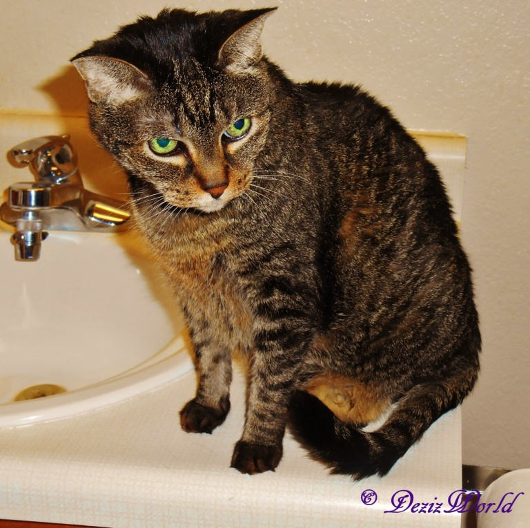 Lexi sitting on bathroom vanity